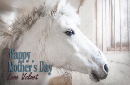 Happy Mother's Day - Horse