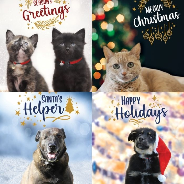Holiday Card Packs