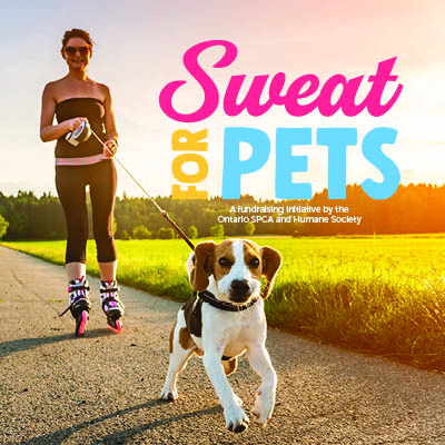 Sweat for Pets Twitter