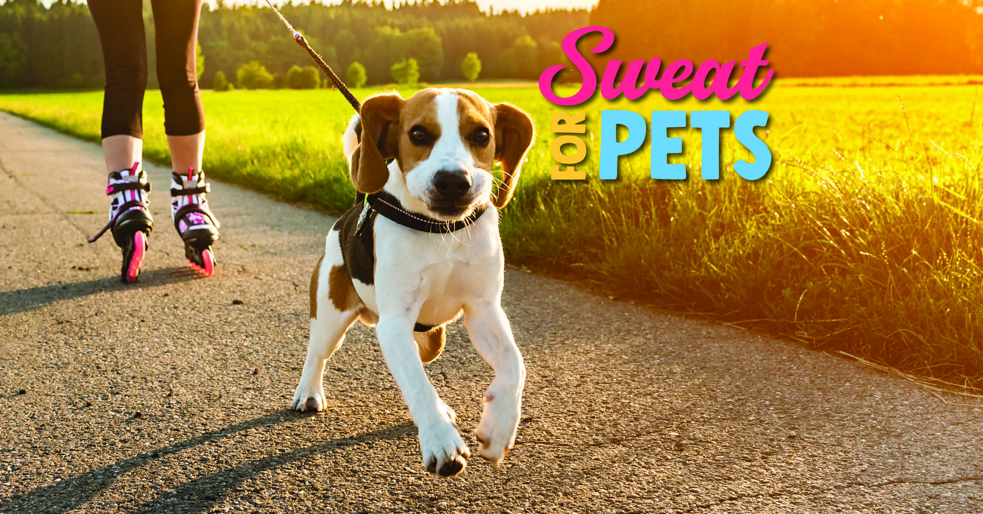 Sweat for Pets Facebook Cover Photo