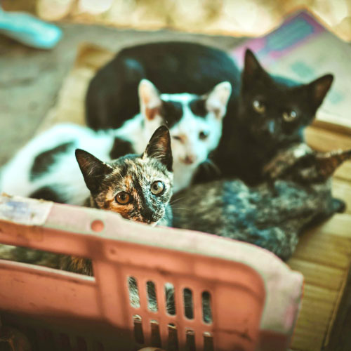 Click here for more information about Support a Small Cat Colony