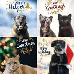 Click here for more information about 24-pack 2020 Holiday Cards