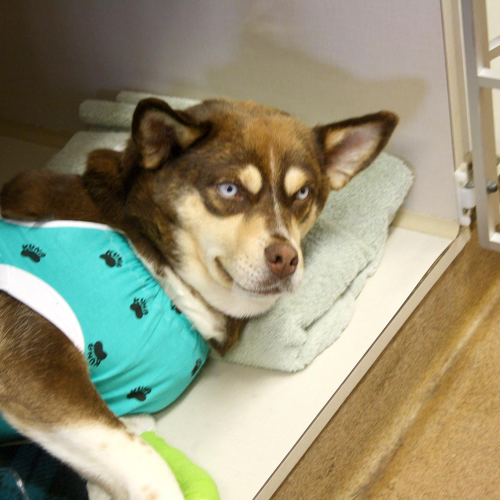Click here for more information about Spay/Neuter a Dog or Puppy