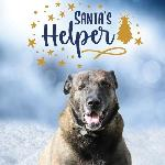 "Click here for more information about 10-pack 2020 ""Santa's Helper"" Cards"