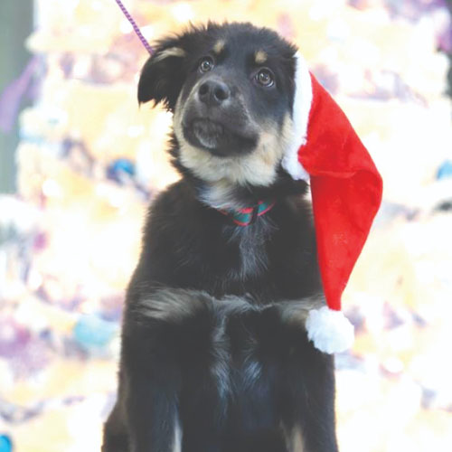 Click here for more information about Dog Holiday Care Package