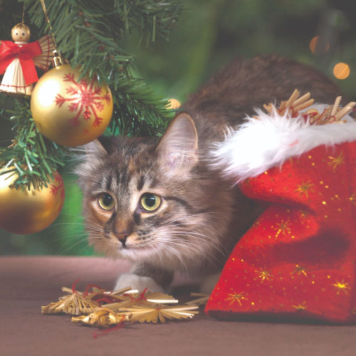 Click here for more information about Cat Holiday Care Package