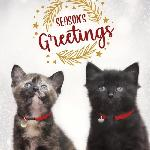 "Click here for more information about 10-pack 2020 ""Season's Greetings"" Cards"